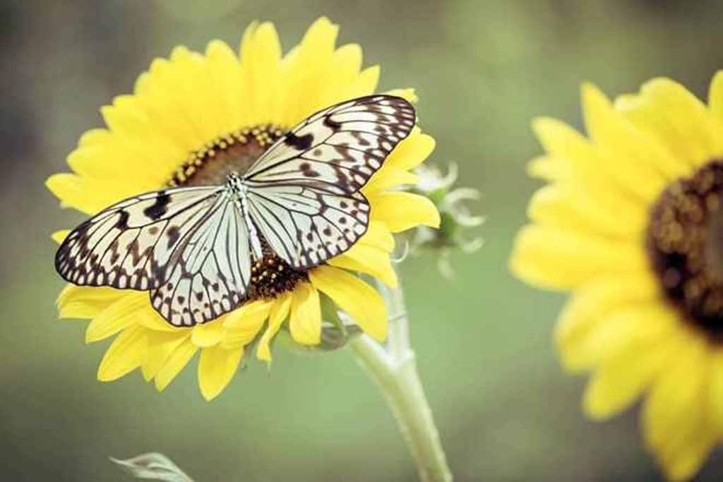 szarnyalo pillangok 4