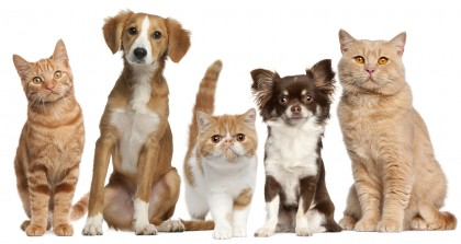 bigstock-Group-of-cats-and-dogs-in-fron-28159637