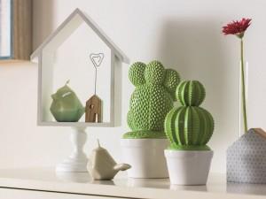kaktusz_web