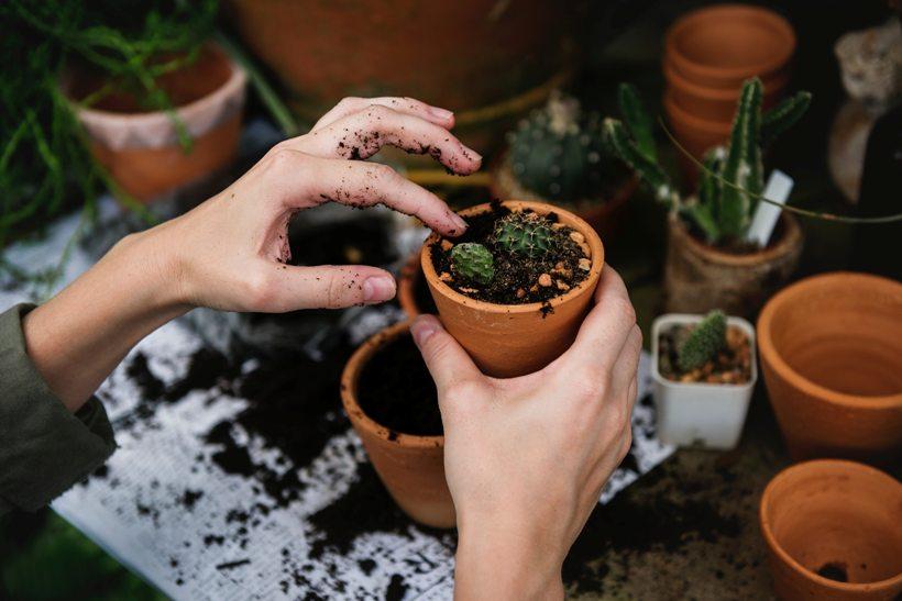 növény ültetés