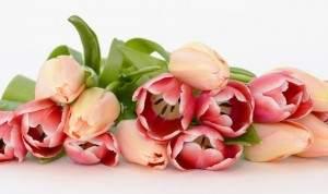 tulips-2152975_1920