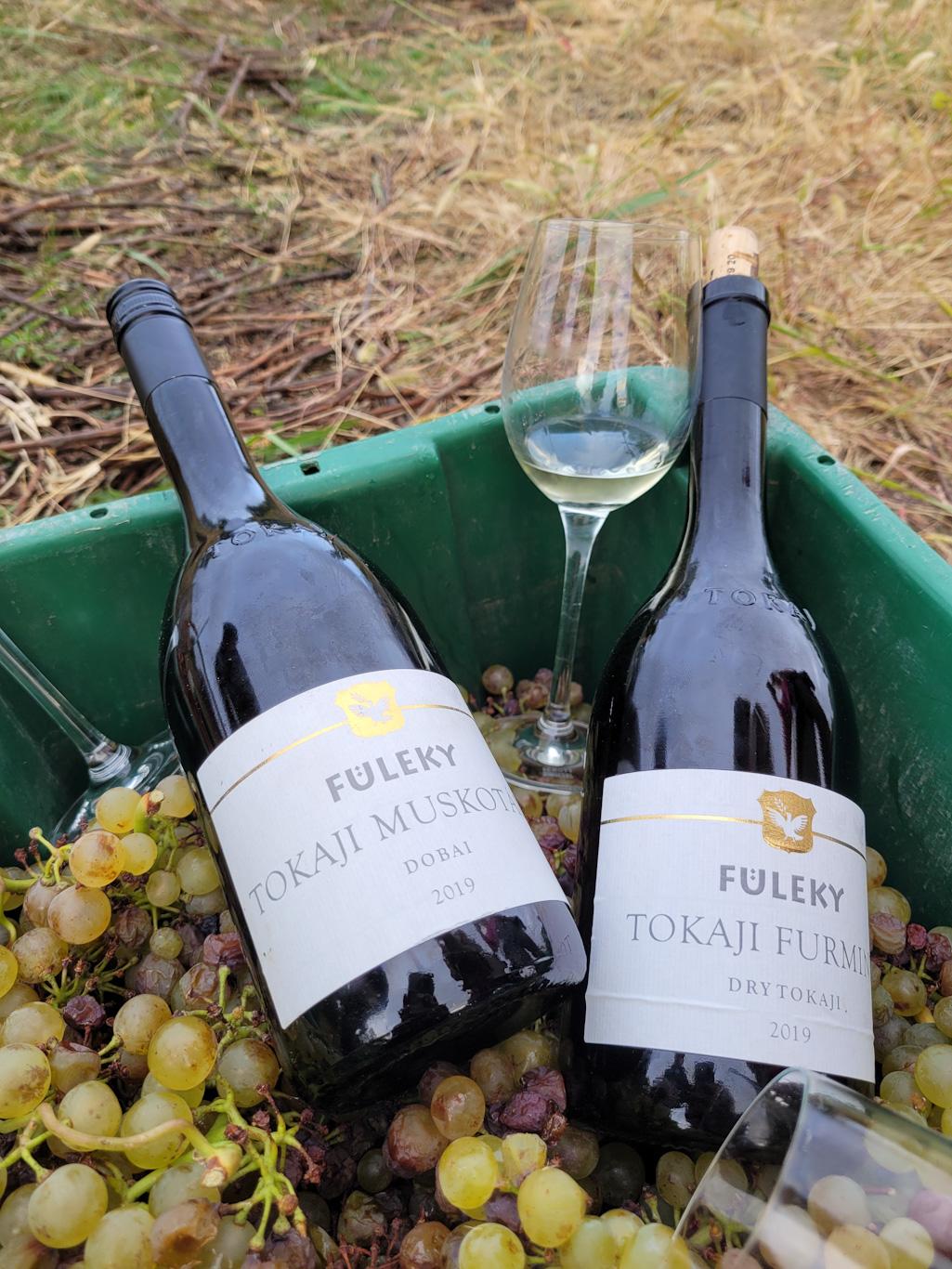vödör szőlő